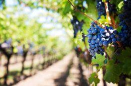 Cure détox d'automne naturelle avec 11 aliments de saison
